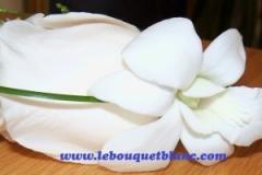 Rose-white-dendrob-bouquet.blanc_-e1428258375589